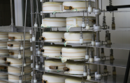 Vertical presses for cheese and ricotta
